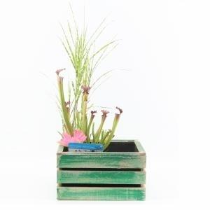 Mini vijver in houten kistje groen - 2 stuks