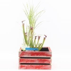 Mini vijver in houten kistje rood - 2 stuks