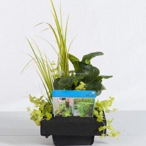 Mix waterplanten op drijvend planteneiland - 2 stuks