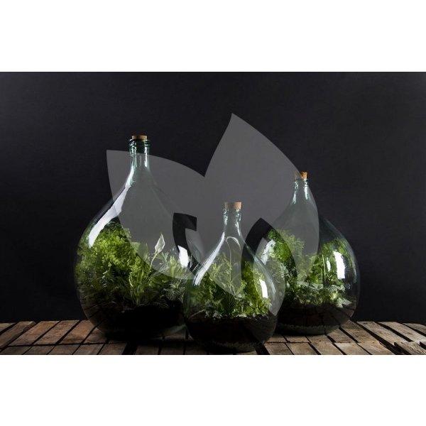 Terrarium flesBloempot soorten